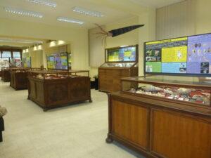 Museo Paleontologia Catania- Foto Rossana Sanfilippo nr 1